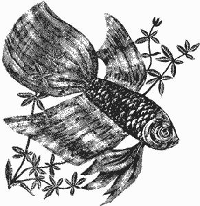 Изображение к книге Аквариумное рыбоводство