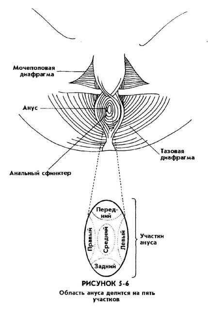 аппарат приземлился расстояние между анусом и вульвой когда