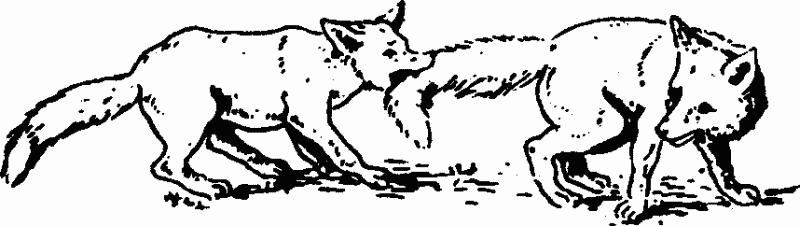 Изображение к книге Основы зоопсихологии