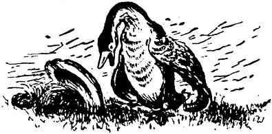 Изображение к книге Амурские сказки