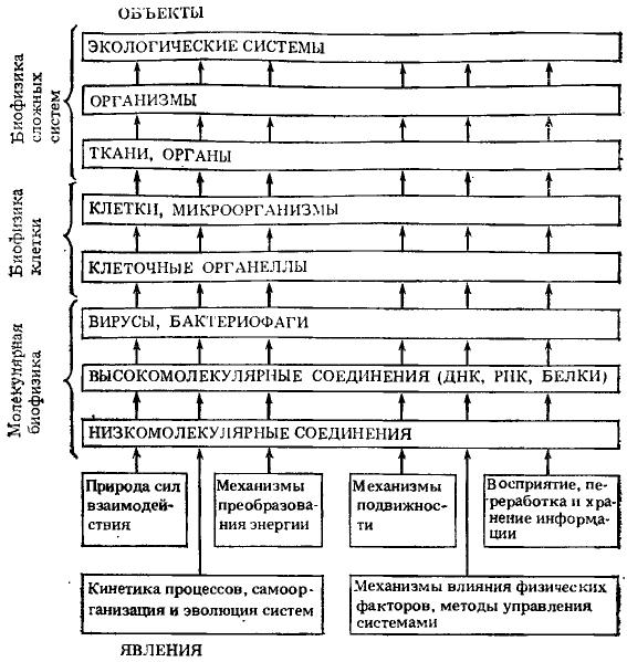 Изображение к книге Биофизика познает рак