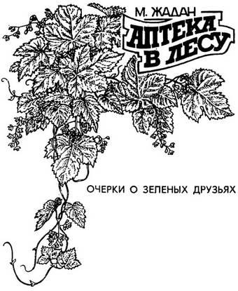 Изображение к книге Аптека в лесу