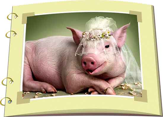 Изображение к книге Аномалии поведения свиней