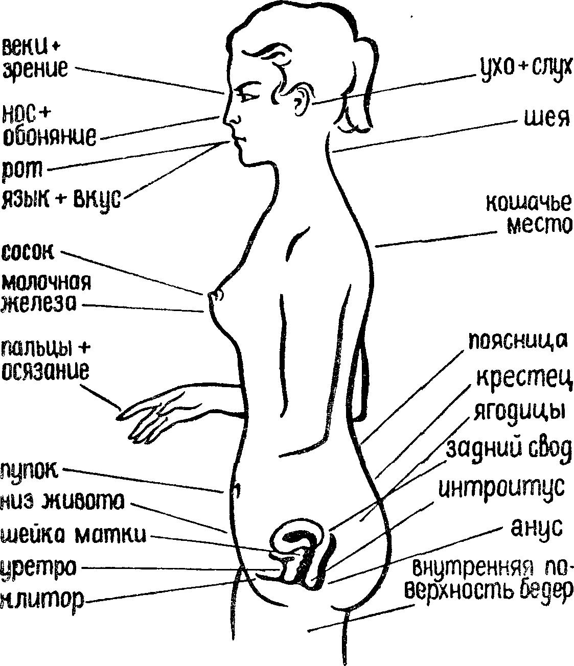 Где девушек эротические точки — pic 14