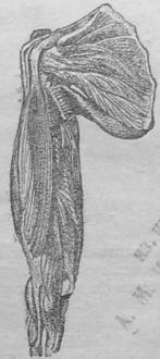 Изображение к книге Смерть и оживление