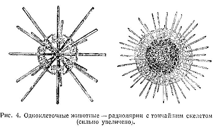 Радиолярии рисунок с подписями